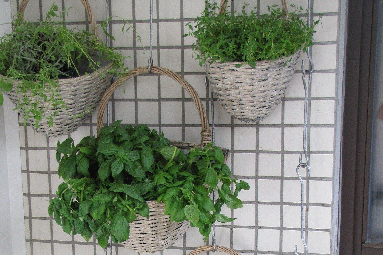 Giardini Verticali Fai Da Te i giardini verticali portano la primavera in casa: ecco le