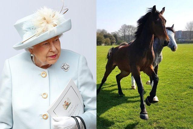 La regina Elisabetta riserva un palazzo reale ai cavalli: co
