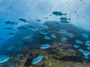 Itinerario sott'acqua tra pesci esotici con Google Street View