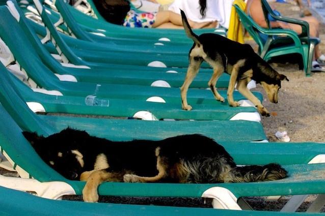 Spiagge in Sicilia con il cane: dove andare con Fido