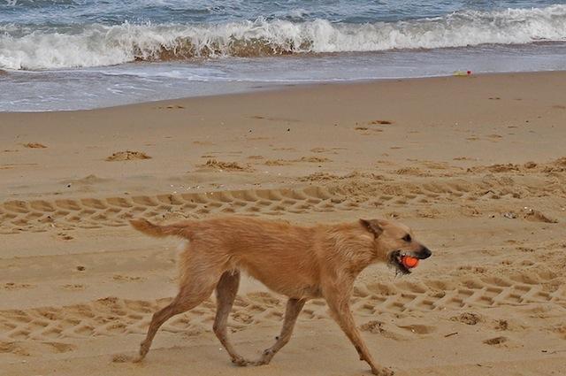 Anche i cani si divertono al mare