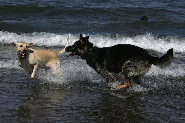 Anche i cani sanno divertirsi in spiaggia
