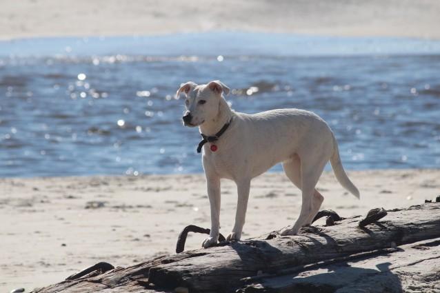 Le migliori spiagge per cani in Europa