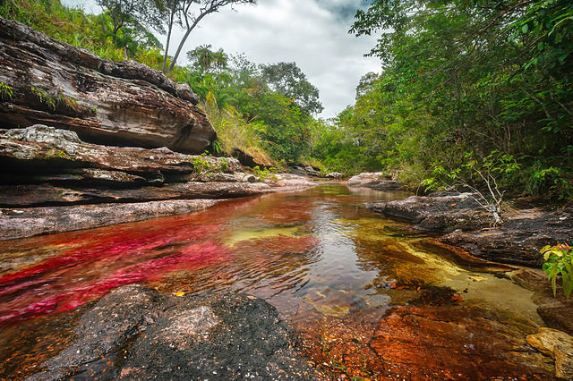 Cano Cristales, Colombia – Foto Wikimedia Commons