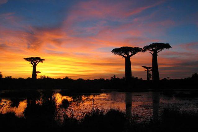 Tramonto nel Viale dei Baobab – Foto Wikimedia Commons
