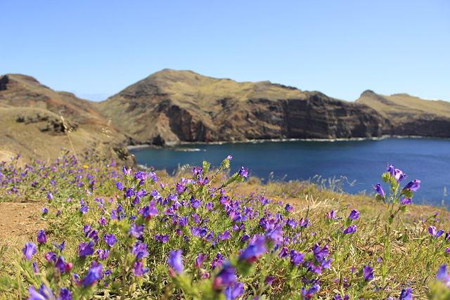 Primavera a Madeira – Foto Wikimedia Commons
