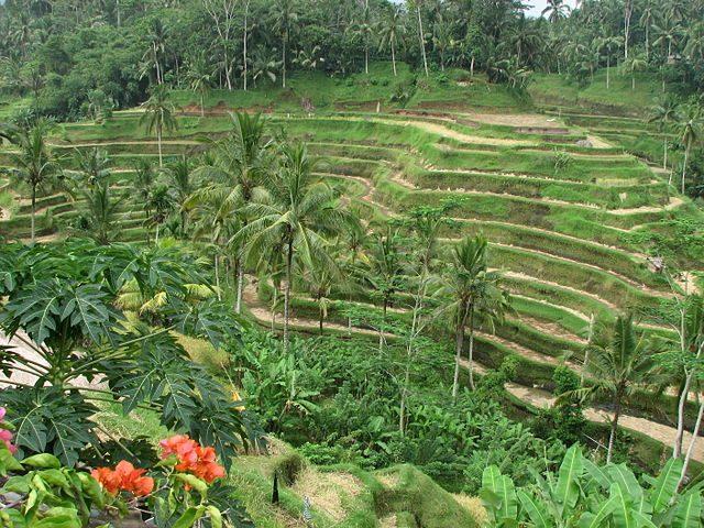 Ubud, Bali – Foto Wikimedia Commons