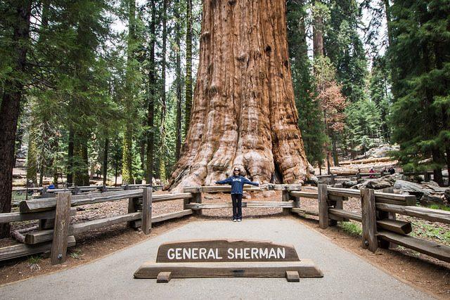 Generale Sherman – Foto di m01229
