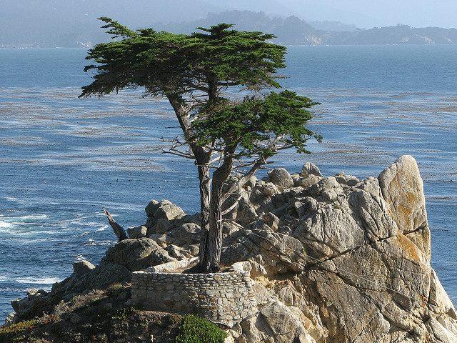 Cipresso solitario di Monterey – Foto di Kevin Rushforth