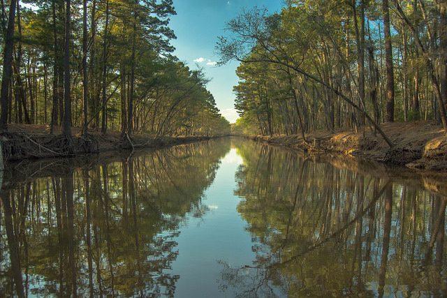 Caddo Lake – Foto di Maciej Kraus
