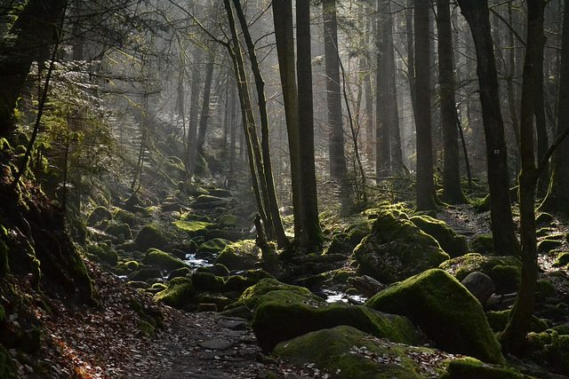 Foresta Nera – Foto di ptwo