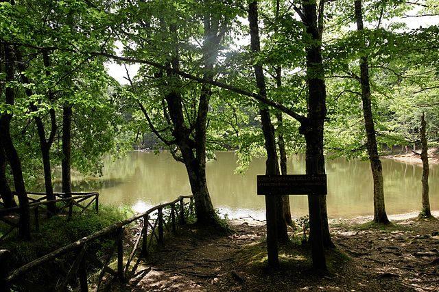 Foresta Umbra – Foto Wikimedia Commons