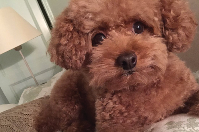 """È morto Why, il cane di Ornella Vanoni: """"Un cane più grande le ha tolto la vita, è morta sopra di me"""""""