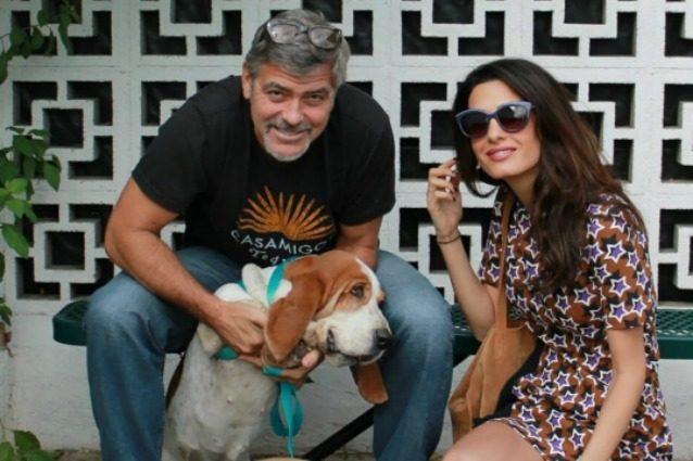 George Clooney e Amal donano 10mila dollari per salvare nove cani