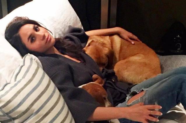 """Lo straziante addio di Meghan Markle al suo cane, resta in Canada perché """"vecchio per volare"""""""