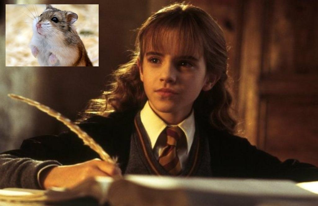 Harry Potter Camera Dei Segreti : Immagini per harry potter la camera dei segreti ps gamestorm
