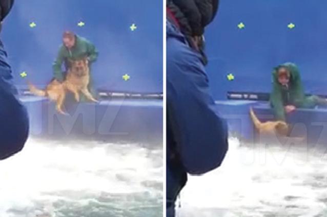"""Cani spaventati sul set di """"Qua la zampa!"""", forzati a tuffarsi in acque agitate"""