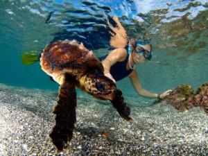 Zoomarine di roma apre il primo ospedale per tartarughe for Vasche per tartarughe marine