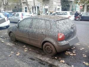 Guano e pioggia sull'asfalto: chiuso un tratto di Lungotevere per rischio incidenti