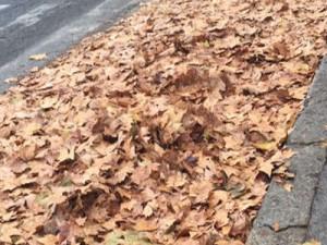 Emergenza foglie, a lavoro 250 squadre dell'Ama