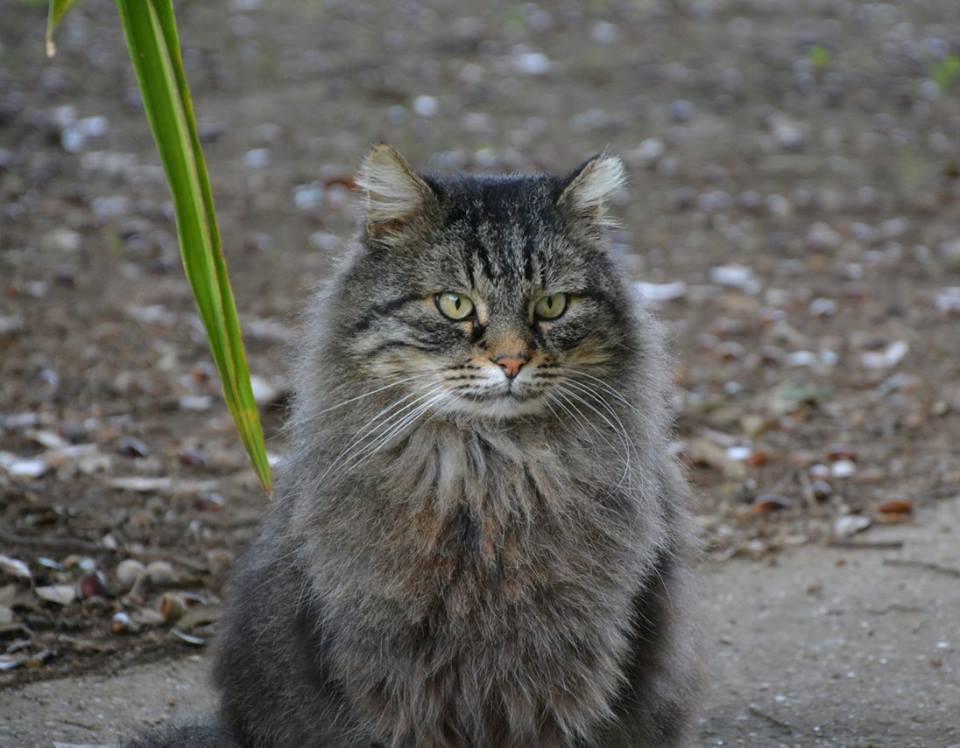 Il mediterranean winner show a roma i gatti pi belli del for I mobili piu belli del mondo