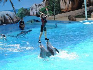 Spettacolo dei delfini di Zoomarine