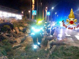 La Storta, albero si abbatte su via Cassia: grave automobilista