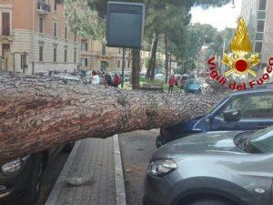 Roma, cade un grosso pino in corso Trieste: danneggiate diverse automobili