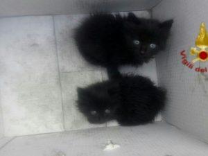 Incendio a Pomezia, i pompieri salvano due gattini dalla nube tossica