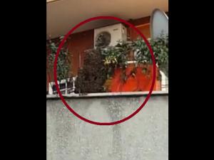 Paura a Roma, c'è un enorme sciame di api sul balcone