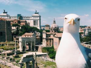 L'epic fail del Comune: buongiorno Roma con un gabbiano, il simbolo della 'mondezza'