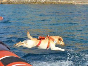Ostia, 15enne rischia di annegare: salvato dai cani-bagnino Zagor e Audrey