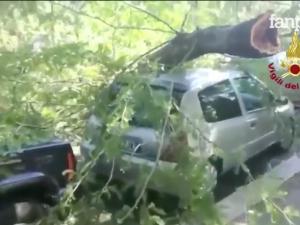 Roma, albero si abbatte su un passante in piazza delle Libertà: ferito gravemente 68enne