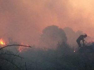 L'incendio divampato nella pineta di Coccia di Morto