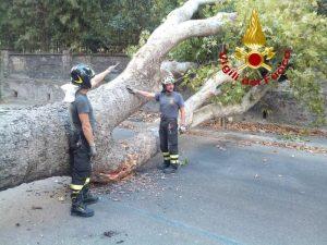 Roma, paura a Monteverde: cade un platano di 20 metri