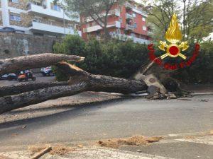 Roma, grosso albero crolla su due automobili in via Cassia: due feriti