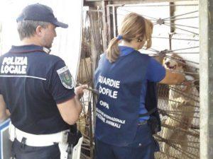 Salvati due cani a Ciampino: erano rinchiusi in gabbie tra rifiuti ed escrementi