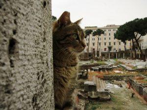 """Tour della """"Roma gattara"""", domenica l'itinerario di un'eterna storia d'amore"""