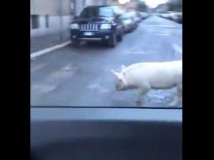 Un frame del video postato su Twitter da Giorgia Meloni