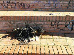 """Acilia, un cane bruciato nel parco pubblico: """"Aiutateci a scoprire chi è stato"""""""