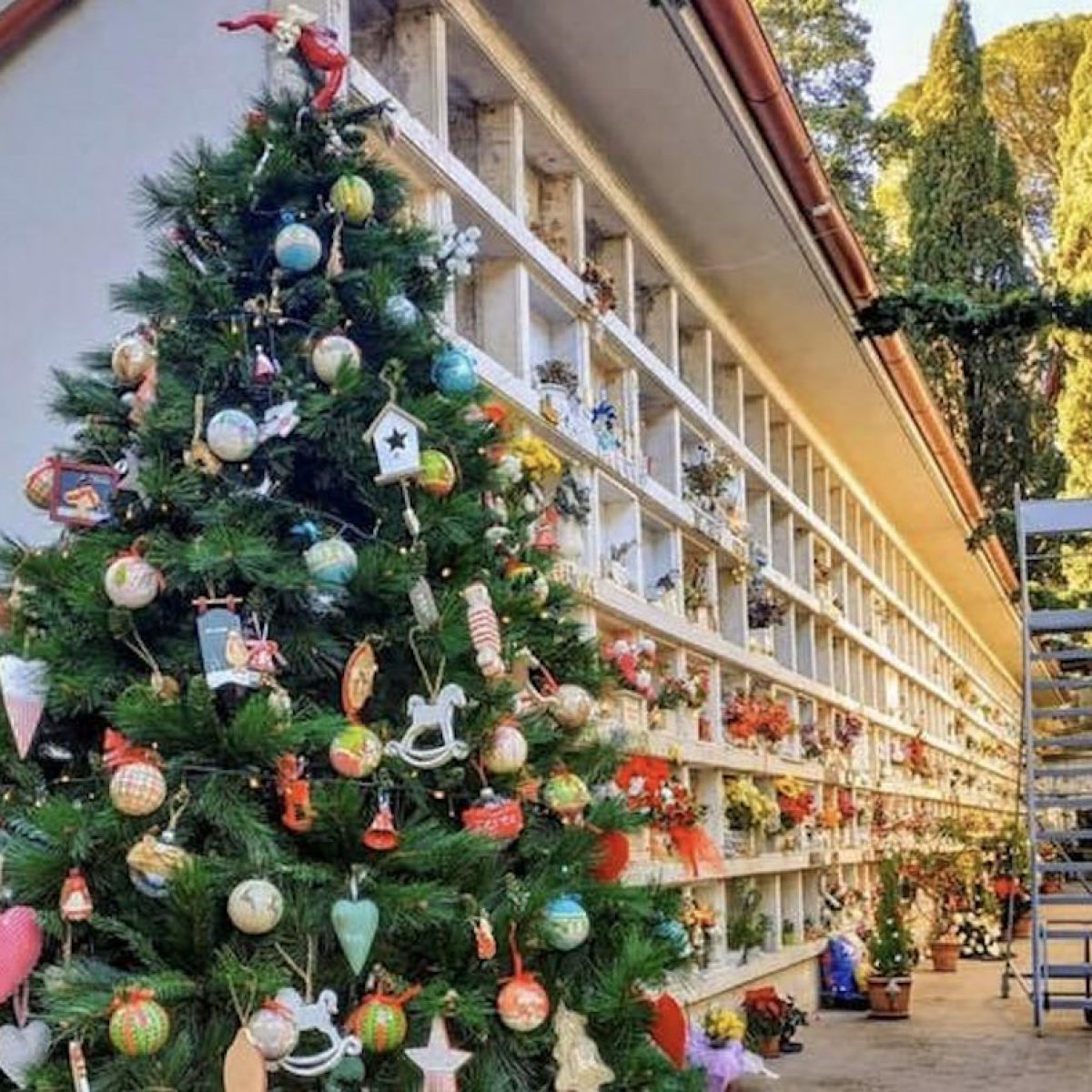 Albero Di Natale 852 Bambini.Un Albero Di Natale Al Cimitero Dei Bambini Del Verano