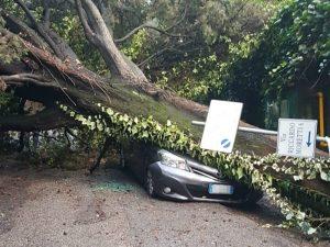 Allerta meteo: alberi caduti per il vento forte, sulla Cassi