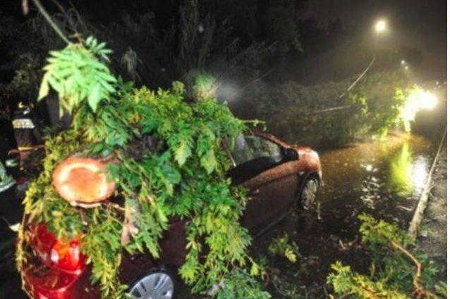 Roma, albero caduto su auto in via del Mare: due feriti tras