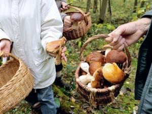 Carate Brianza, marito e moglie intossicati dopo aver raccolto e mangiato funghi