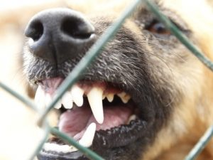 Ragazza di 27 anni morsa da una cane alla testa e al seno a Castenedolo: operata