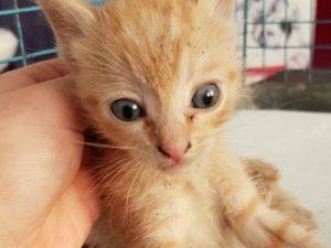 """Chiesti un anno e 4 mesi di carcere per il presunto """"killer dei gatti"""": """"Sono buoni da mangiare"""""""