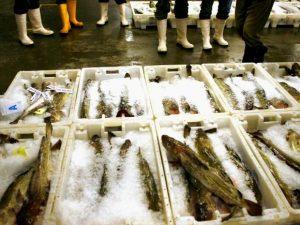 """Milano, lite a pesci in faccia tra il venditore e una cliente al mercato: """"Non è fresco"""""""
