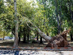 Temporale violentissimo a Milano, sradicati diversi alberi