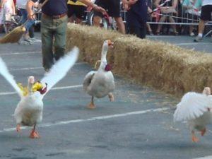 Animalisti bloccano il Palio dell'Oca, cittadini inferociti: interviene la polizia