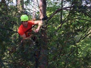 Marco, 29 anni, cade da un albero e muore: stava lavorando in una villa di Berlusconi